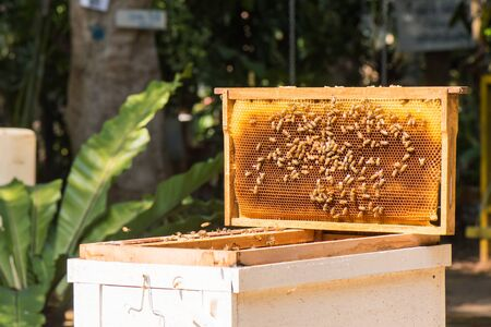 abejas panal: abejas trabajadoras en el panal en colmenar