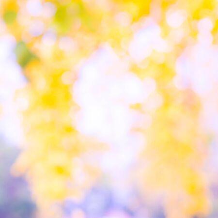 blur effect: Colorful blur garden background