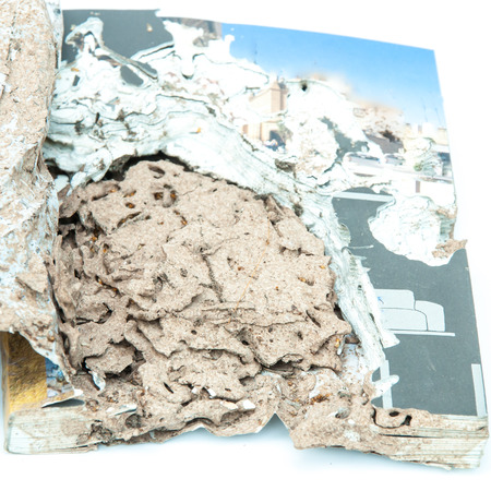 Close up damaged paper eaten by termite