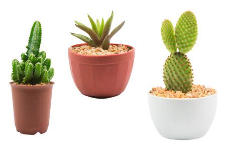 decotated: Cactus isolated on white background