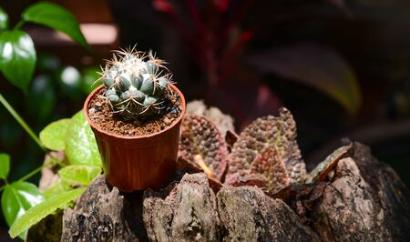 decotated: cactus background and decorated Stock Photo