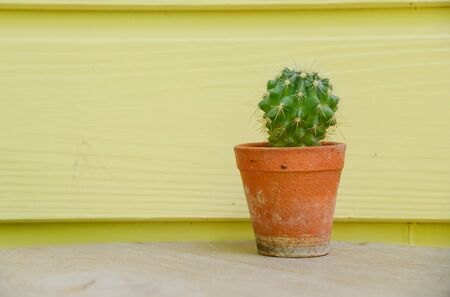 cactus background and decorated Stock Photo