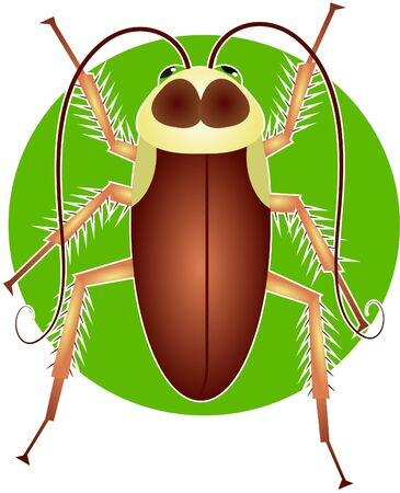 hairy legs: cockroach