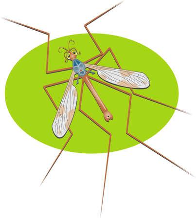 crane fly Stock Photo
