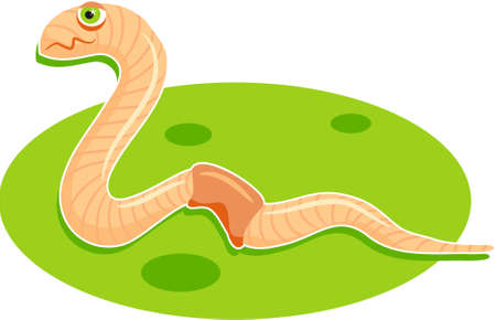 earthworm Stock Photo - 242125