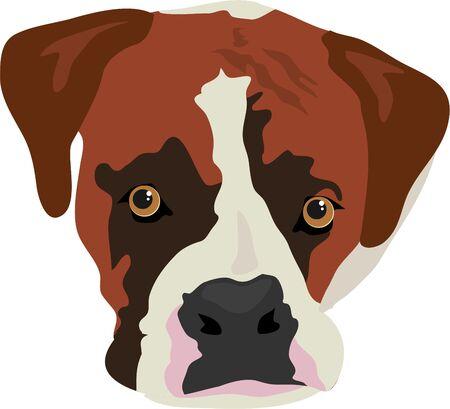 boxer dog: boxer dog face