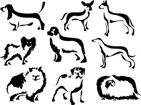 pomeranian: dog breeds