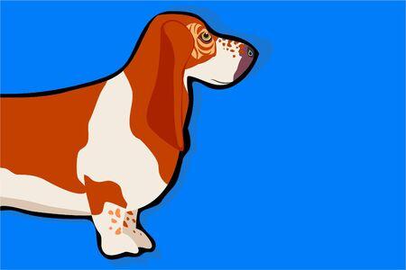 basset: basset hound Stock Photo
