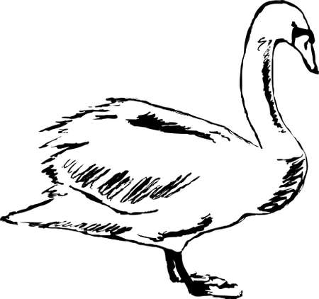 mute swan: rough sketchy drawing style illustration of a swan Stock Photo