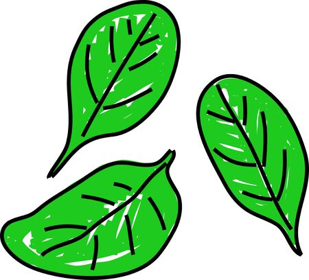 spinach: three leaves of spinach isolated on white drawn in toddler art style
