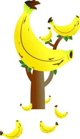 juicy: banana tree with giant banana isolated on white