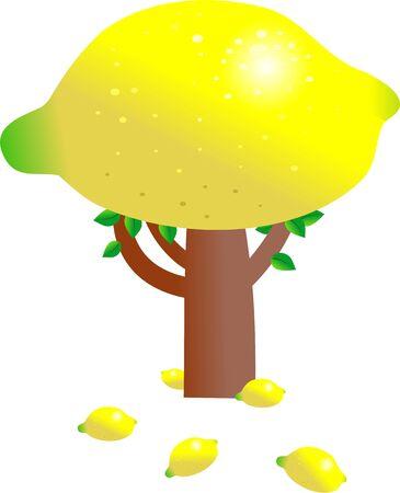 fruitful: giant lemon growing on a fruit tree isolated on white Stock Photo