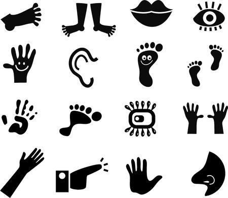 manos y pies: Una colección de 16 iconos de la anatomía negros aislados en blanco. Foto de archivo
