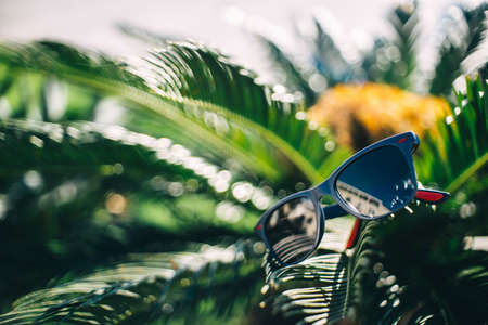 Blue sunglasses on palm leaves in the sun Standard-Bild