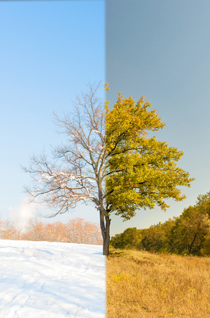 changing seasons: Wood changing seasons from summer to winter or vice-versa