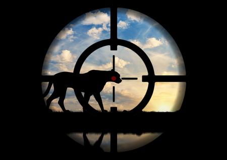 no correr: Caza furtiva. Silueta de un leopardo en contra de la puesta de sol en punta de pistola cazador furtivo Foto de archivo