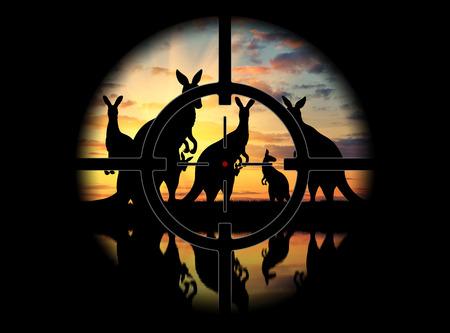 poaching: View through the scope. Poachers prey on kangaroos at sunset