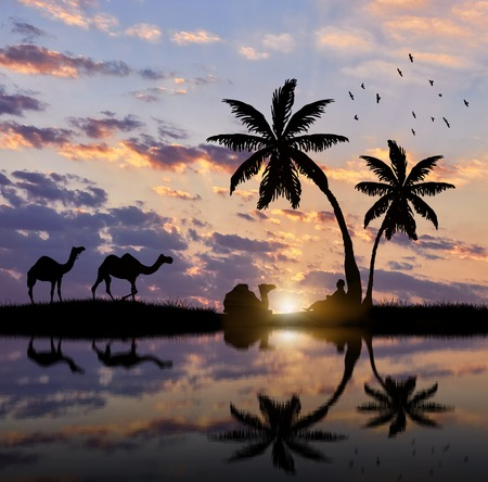 bedouin: Silhouette of a caravan of camels and Bedouin resting near the river at sunset. Stock Photo