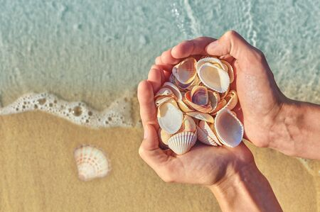 Seashells in hand of man on the background of the waves on the sand. tourism and recreation concept