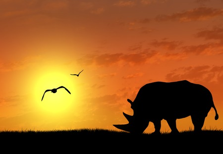 shroud: Silhouette of rhino at sunset. The concept of wildlife Stock Photo