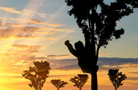 sloth: Sloth animal on the tree on the sunset background Stock Photo