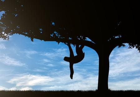 oso perezoso: Sloth animal on the tree against the sky
