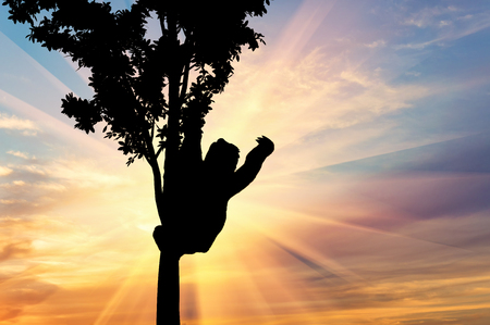 oso perezoso: Sloth animal on the tree on the sunset background Foto de archivo