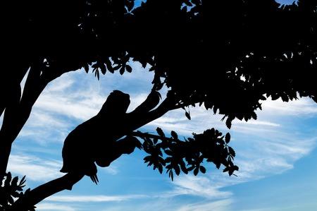 sloth: animales de la pereza en el árbol contra el cielo Foto de archivo