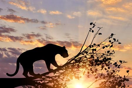 夕日を背景に木からジャガー動物 写真素材