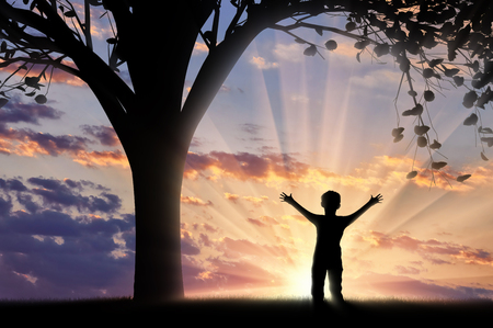 child standing: Happy child standing near tree sunset and raised his hands. Childhood concept Stock Photo