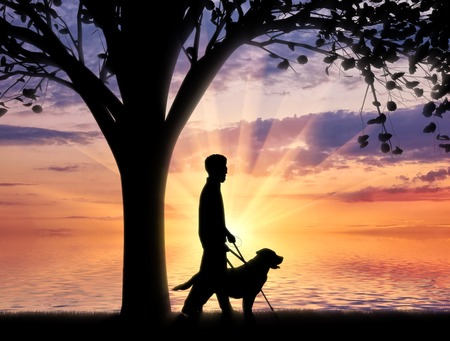 guide dog: Blind disabled with cane and dog guide walk near sea under tree sunset. Concept help blind disabilities