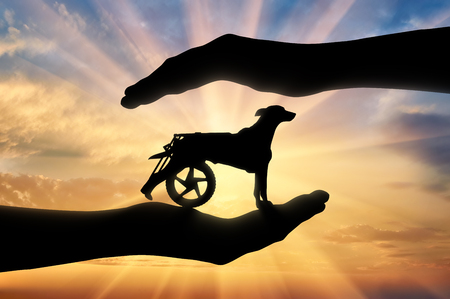 Silhouette of a dog in a wheelchair in the hands of a man. The concept of helping and caring animals with disabilities Stock Photo
