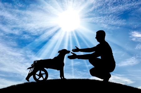 Man in the open air on a hill, calls for a paralyzed dog in a wheelchair. The concept of a dog in a wheelchair