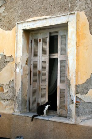 Currious gato mirando a trav�s de la ventana Foto de archivo