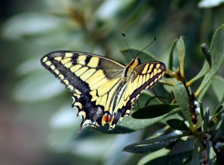 Separe la mariposa de las alas