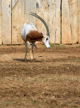 strenght: Axotic african animal  Stock Photo