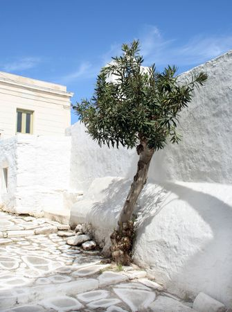 A traditional greek island narrow street with a lone trimmed olive tree outside a whitewashed church. Town of Paroikia.  Paros Island, Greece photo