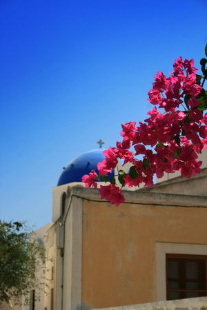 Greek island of Santorini.  Bougainvillea against a blurred background at the town of  Oia. Greece photo