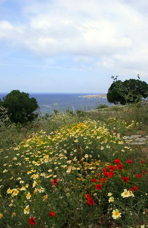 Spring wildflowers blooming at the greek island of Paros Stock Photo - 2958426