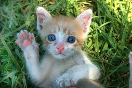 kitten waves hello  photo