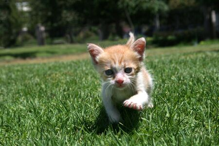 A 3 week old kitten in the park  photo