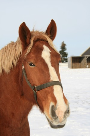 A horse in the snow from a Canadian farm photo