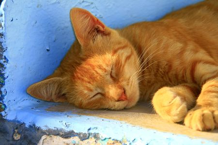 A sleeping kitten on the steps of a traditional greek island house in Ios, Greece