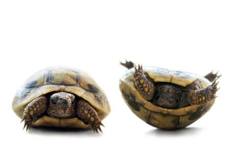 turtle turn up