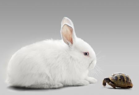 rabbit vs turtle Stock Photo - 24087391