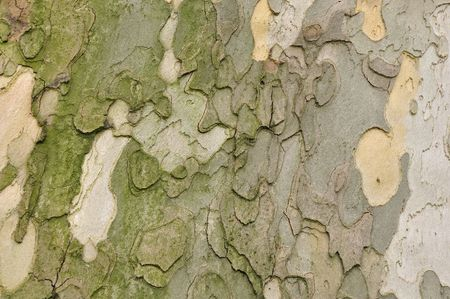 Background image of a wooden crust