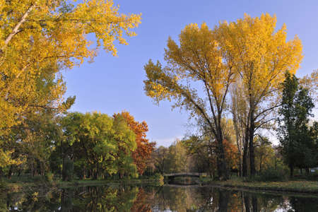Autumn scene of trees with golden leafs Stock Photo