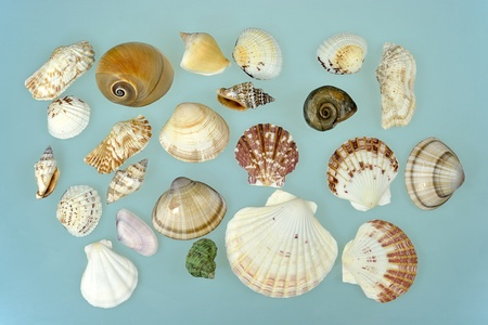 A collection of various sea shells on light blue background