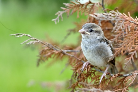a cute tiny sparrow with beautiful background