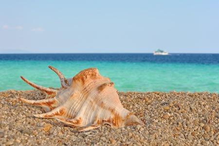 Summer scene #4 Sea shell on the beach
